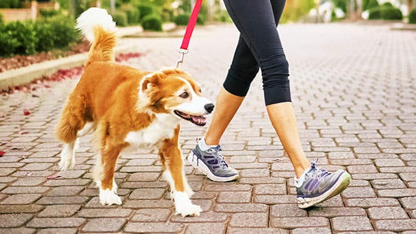 5 Reasons to Hire a Dog Walker!