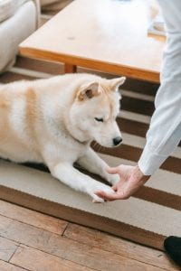 crop person reaching out hand to dog